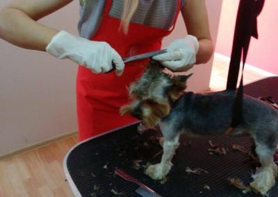 Kurs groomerski - uczestnicy szkolenia strzyżenia psów (2)