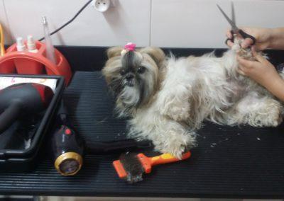 Strzyżenie psów i kursy groomerskie - Studio Pupil (3)