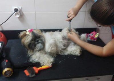 Strzyżenie-psów-i-kursy-groomerskie---Studio-Pupil-(4)