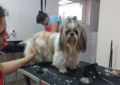 Strzyżenie psów i kursy groomerskie - Studio Pupil (6)