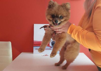 Studio Psiej Urody Pupil - strzyżenie psów i kusy groomerskie (1)