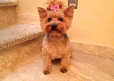 Stzryżenie-psów-i-kursy-groomerskie-Pupil-Konin-(4)