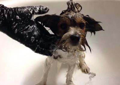 Stzryżenie-psów-i-kursy-groomerskie-Pupil-Konin-(6)