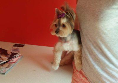 strzyżenie i pielęgnacja psów, kursy gromerskie-pupil-konin (12)