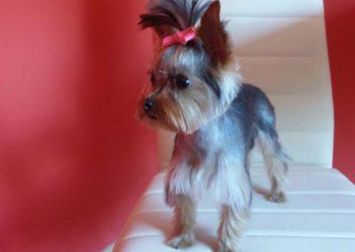 strzyżenie i pielęgnacja psów, kursy gromerskie-pupil-konin (14)
