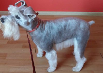 strzyżenie i pielęgnacja psów, kursy gromerskie-pupil-konin (17)