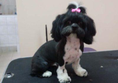 strzyżenie i pielęgnacja psów, kursy gromerskie-pupil-konin (19)