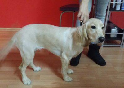 strzyżenie i pielęgnacja psów, kursy gromerskie-pupil-konin (32)
