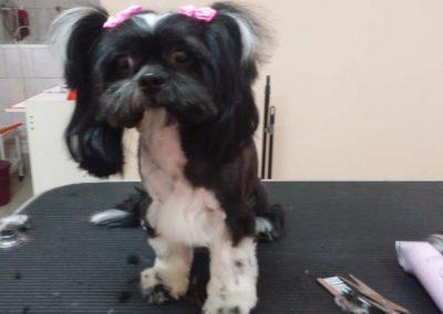 strzyżenie i pielęgnacja psów, kursy gromerskie-pupil-konin (33)
