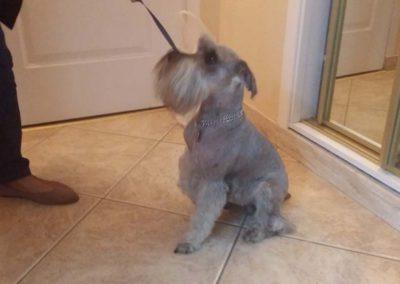 strzyżenie i pielęgnacja psów, kursy gromerskie-pupil-konin (40)