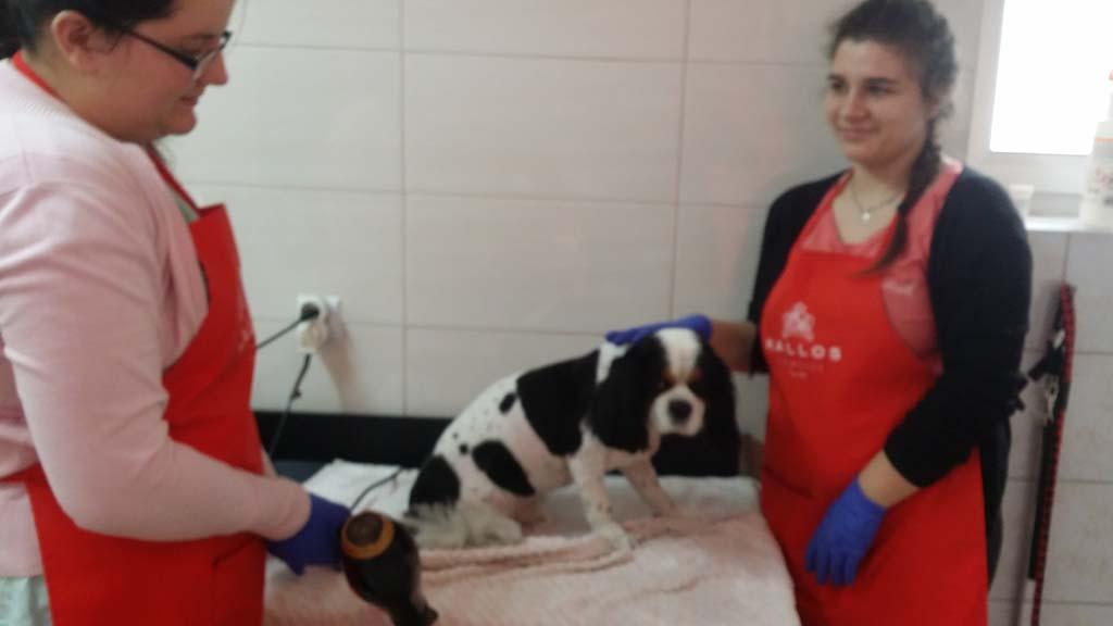 strzyżenie i pielęgnacja psów, kursy gromerskie-pupil-konin (43)