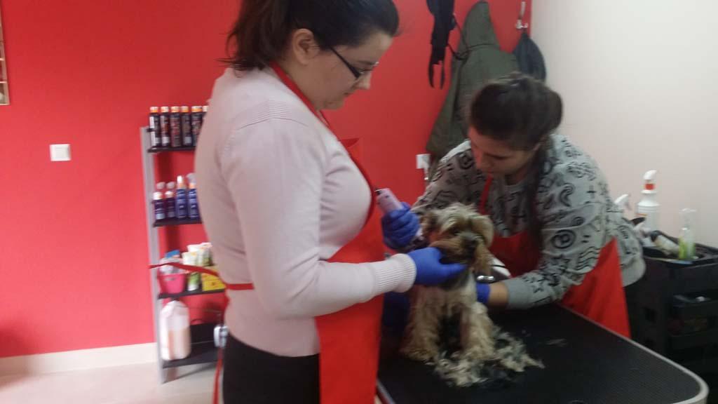 strzyżenie i pielęgnacja psów, kursy gromerskie-pupil-konin (44)