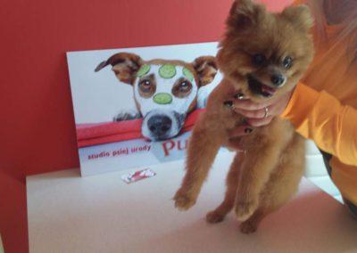 strzyżenie i pielęgnacja psów, kursy gromerskie-pupil-konin (45)