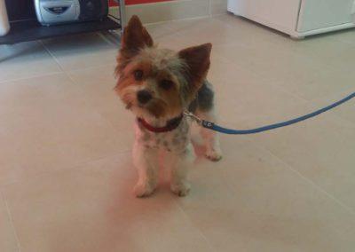 strzyżenie i pielęgnacja psów, kursy gromerskie-pupil-konin (47)