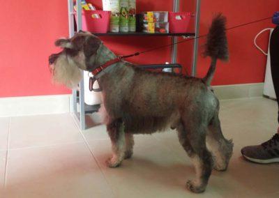 strzyżenie i pielęgnacja psów, kursy gromerskie-pupil-konin (51)