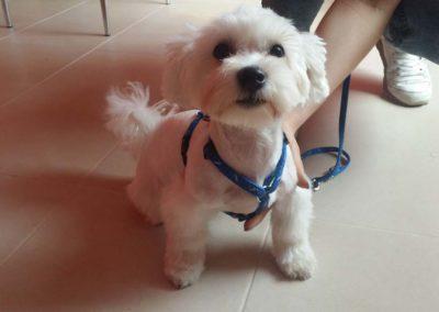 strzyżenie i pielęgnacja psów, kursy gromerskie-pupil-konin (52)