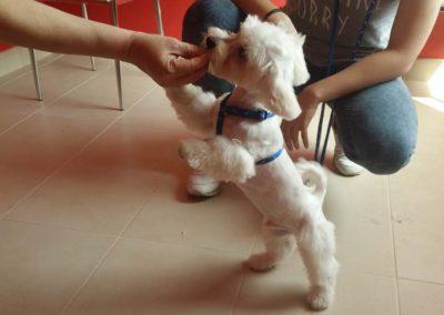 strzyżenie i pielęgnacja psów, kursy gromerskie-pupil-konin (53)