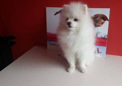 strzyżenie i pielęgnacja psów, kursy gromerskie-pupil-konin (56)
