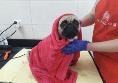 strzyżenie i pielęgnacja psów, kursy gromerskie-pupil-konin (66)