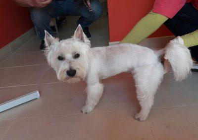 strzyżenie i pielęgnacja psów, kursy gromerskie-pupil-konin (70)