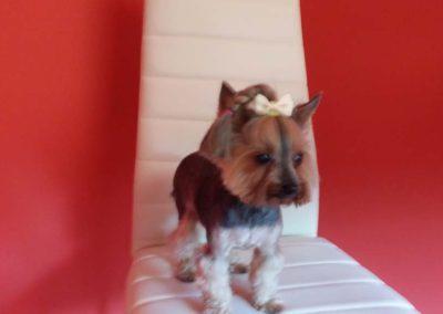strzyżenie i pielęgnacja psów, kursy gromerskie-pupil-konin (9)